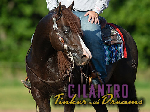 "Tinker With Dreams (""Cilantro"")"