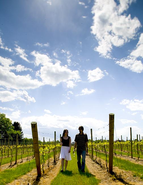 Vineyard Early Spring