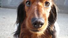 Il mio cane mi salva la vita tutti i giorni 🐺