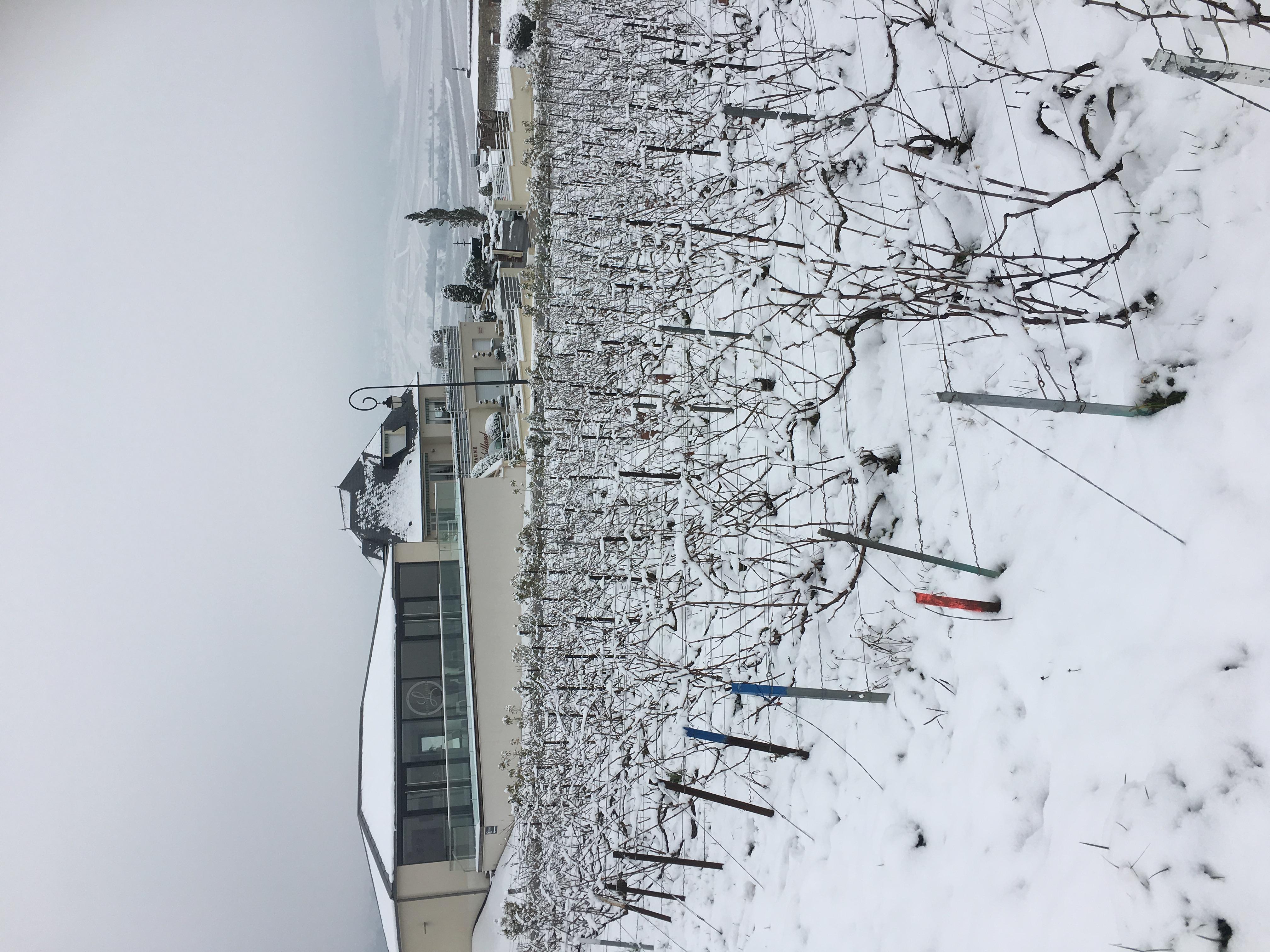 L'effervescence sous la neige