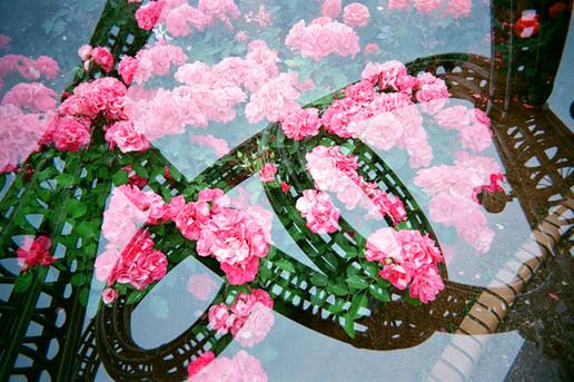 写ルンです/Fuji SUperia800 フィルムスワップ with Hoda Sato