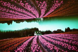 天空の絨毯