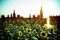 夏色の倫敦