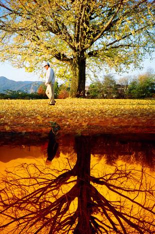 経時変化 -autumn dimension-