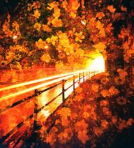 花隧道 -floral tunnel