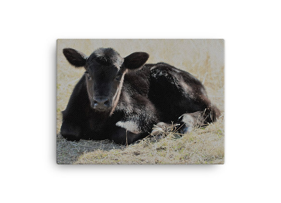 'Cow' Canvas