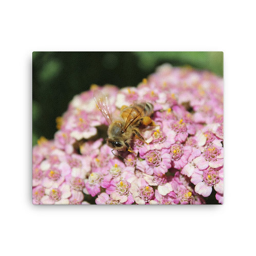 'Busy Bee' Canvas