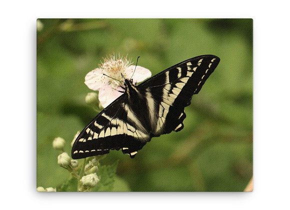 'Butterfly' Canvas