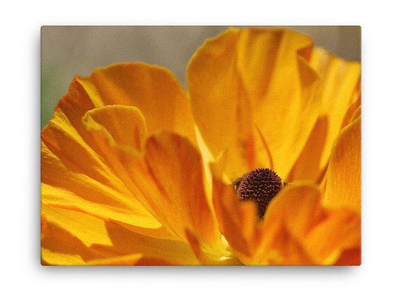 'Ranunculus' Canvas