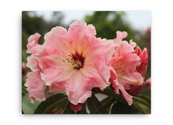'Rhododendron' Canvas