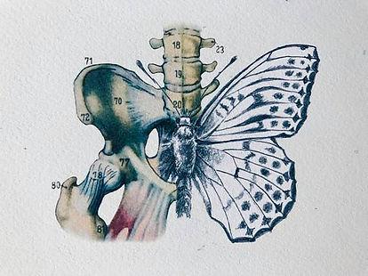 pánev a motýl.jpg