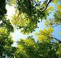 tree-3089993_1920.jpg