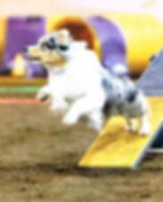 Chase teeter jump 2019.jpg