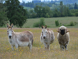 donkeys and raphael best pic.jpg