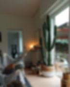 Euphorbia ingens.jpeg