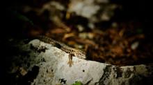 Des insectes dans mon jardin - les prédateurs (3/3)