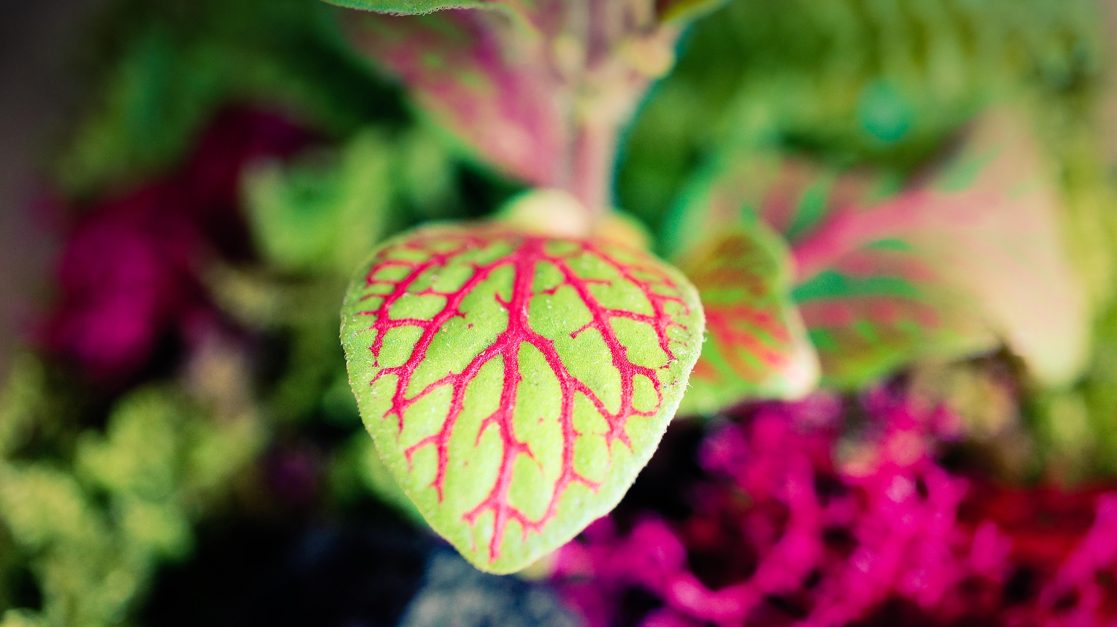 Mon Terrarium Végétal - 15 mai 2021
