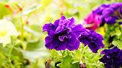 Nature&Co Boutique en ligne, vente de plantes Genève, abonnement floral, paysagisme et entretien