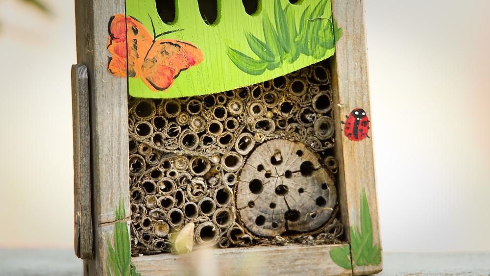 coronavirus: construction d'un hôtel à insectes