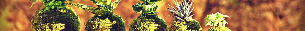 Nature&Co, boutique en ligne, plantes à Genève, paysagisme, abonnement floral