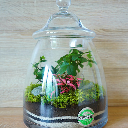 "Terrarium - ""Prehistoric Jungle"""