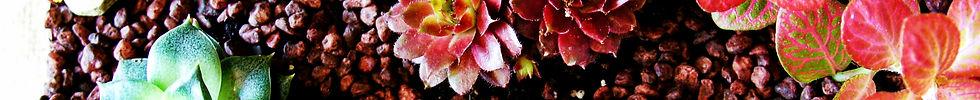 Nature&Co, plantes à Genève, abonnement floral, paysagisme, boutique en ligne, enretien et évènements