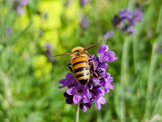 Des insectes dans mon jardin - les pollinisateurs (1/3)