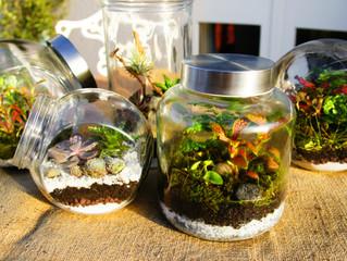 Le monde magnifique des terrariums