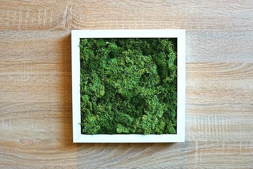 Cadre Végétal Uni 25x25cm