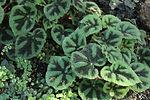 Nature&Co plantes à Genève, abonnement floral, paysagisme, évènements et entretien