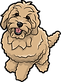 goldendoodle-collection-003.png