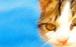 Um Gato em Nápolis, Itália