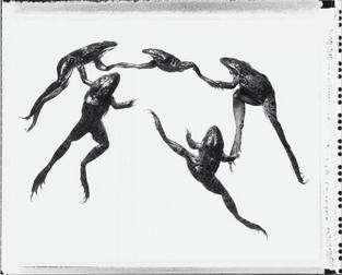 La Danza - 2003