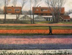 Dutch tulips 2