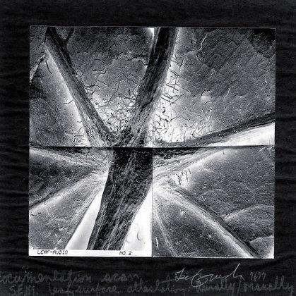 Leif Brush: Stitching in Process: Windmixed Data Album