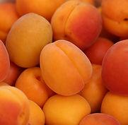 apricots-4210720_1920 (1).jpg