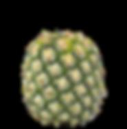 AdobeStock_113732802.png