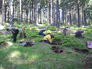 Forest Planting.jpg