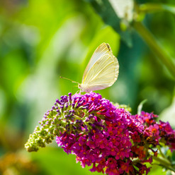 bigstock-Beautiful-Macro-Closeup-Of-A-W-