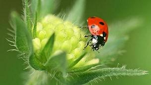 ladybird photo 2.2.jpg