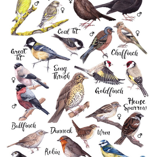 Rachel Corney Designs Types of Birds.jpg