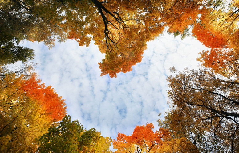 Heart surrounded by autumn trees.jpg
