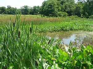 Wetlands Twycross Zoo.jpg