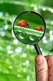 Great British Bug Hunt searching for bug