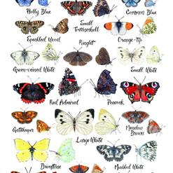 Rachel Corney Designs Butterflies of Bri