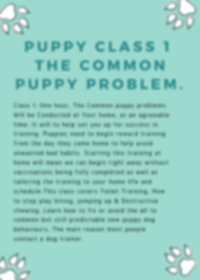 Common puppy problem, toilet training. stop puppy bitting
