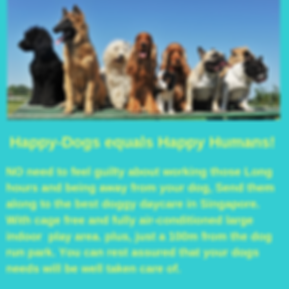 Best dog daycare in Singapore