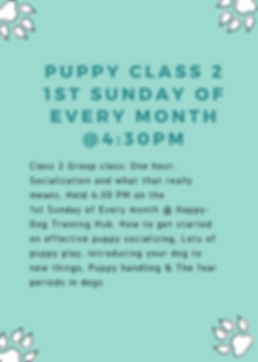 socialization classes for puppies and dogs.