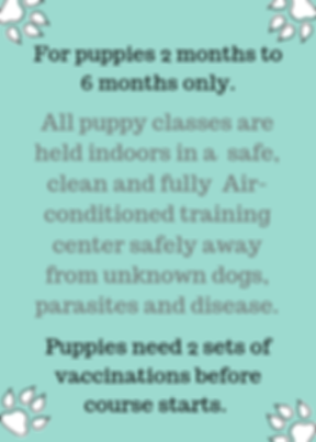 Best dog training school in Singapore