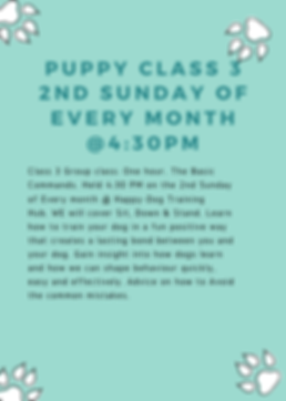 puppy group classes. Basic commands.